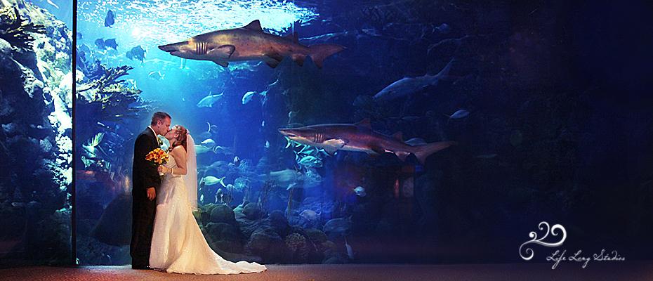 Stop Two In Our Unique Wedding Venue Series Seaworld Or An Aquarium