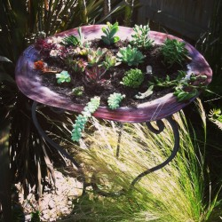 bird bath planted with succulents