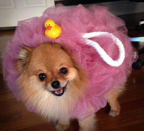 bath time dog costume