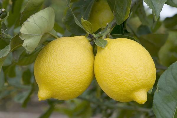 When life Brings you Lemons…Make Lemon Water!