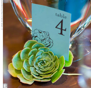 table marker with a succulent